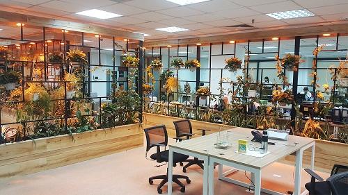 Văn phòng xanh được trang trí rất nhiều cây xanh và tối giản không gian làm việc.