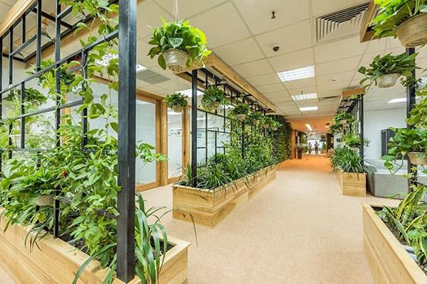 xây nhà cho thuê văn phòng xanh giúp kết nối giữa con người và thiên nhiên.